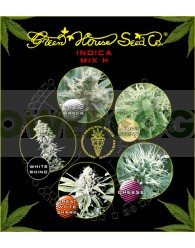 Indica Mix H (Green House Seeds)