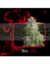 Ira Ak (7 Pekados Seeds)
