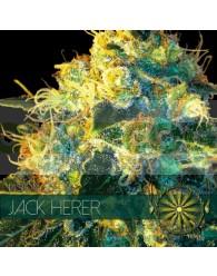 Jack Herer Feminizada (Vision Seeds)