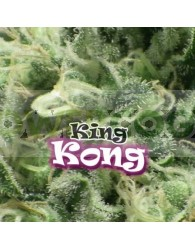 King Kong (Dr. Underground Seeds)