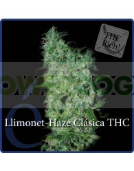 Llimonet Haze (Elite Seeds)
