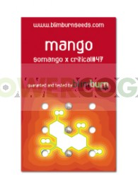 Mango (Blim Burn Seeds)