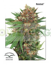 Masterkush (Dutch Passion Seeds) Feminizada
