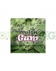 Melon Gum Feminizada (Dr. Underground Seeds)