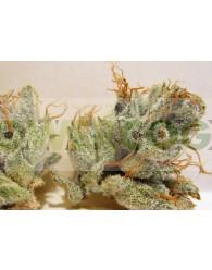 Napalm (Biohazard Seeds)