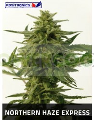 Northern Haze Express (Positronics Seeds)