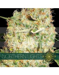 Northern Lights Feminizada (Vision Seeds)