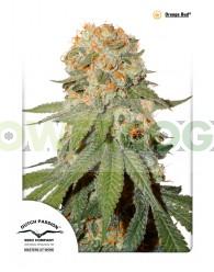 Orange Bud (Dutch Passion Seeds) Regular