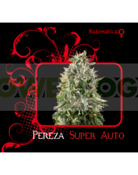 Pereza Super Auto (7 Pekados Seeds)