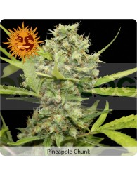 Pineapple Chunk (Barney´s Farm Seeds)