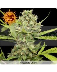 Pineapple Chunk (Barney´s Farm Seeds)
