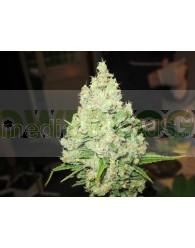 Prozack (Medical Seeds) Feminizada