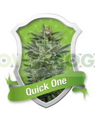 Quick One Autofloreciente (Royal Queen Seeds)