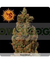 Red Diesel (Barney´s Farm Seeds)