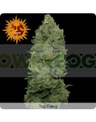 Top Dawg (Barney´s Farm Seeds)