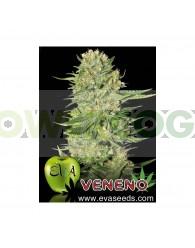 Veneno (EVa Seeds)