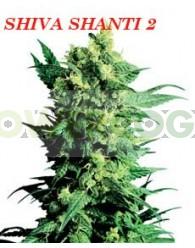 Shiva Shanti II (Sensi Seeds) Regular