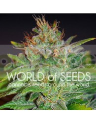 Skunk 47 (World of Seeds) Feminizada