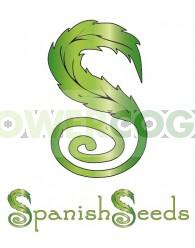 Early Skunk x White Widow (Spanish Seeds)
