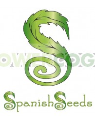 White Widow x Super Silver (Spanish Seeds) Feminizadas
