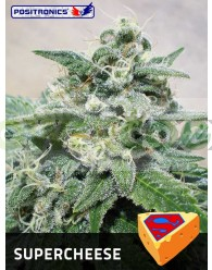 SuperCheese (Positronics Seeds)