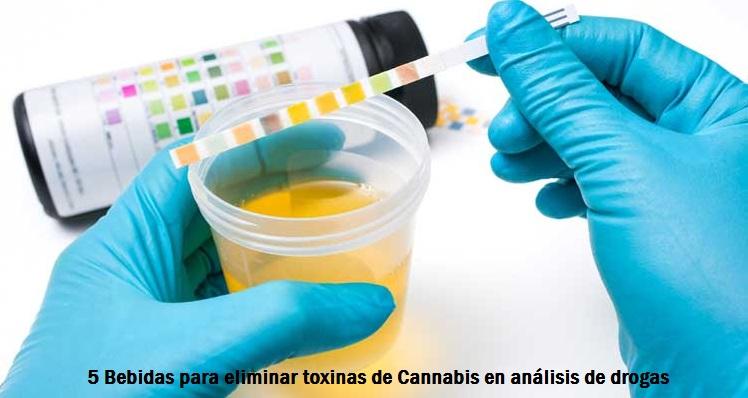 5 Bebidas para eliminar toxinas de Cannabis en análisis de drogas