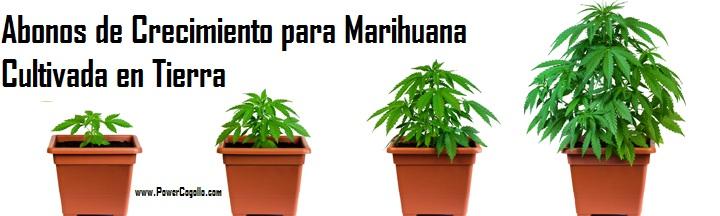 Abonos y fertilizantes para Crecimiento de la Marihuana en Tierra