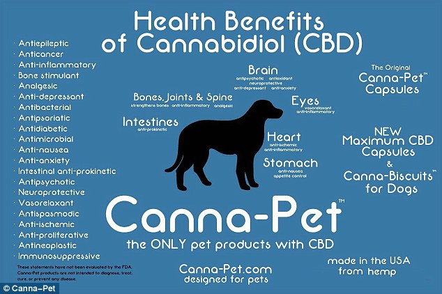 Beneficios del Cannabis en los Animales