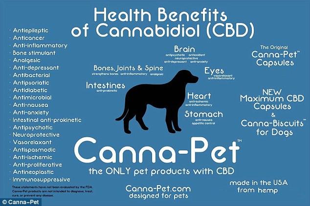 Beneficios del Cannabis en los Animales
