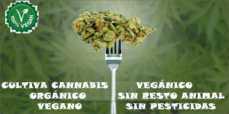 Cannabis Veganico