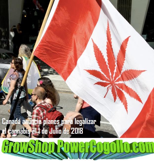 Canadá anuncia planes para legalizar el cannabis en 2018