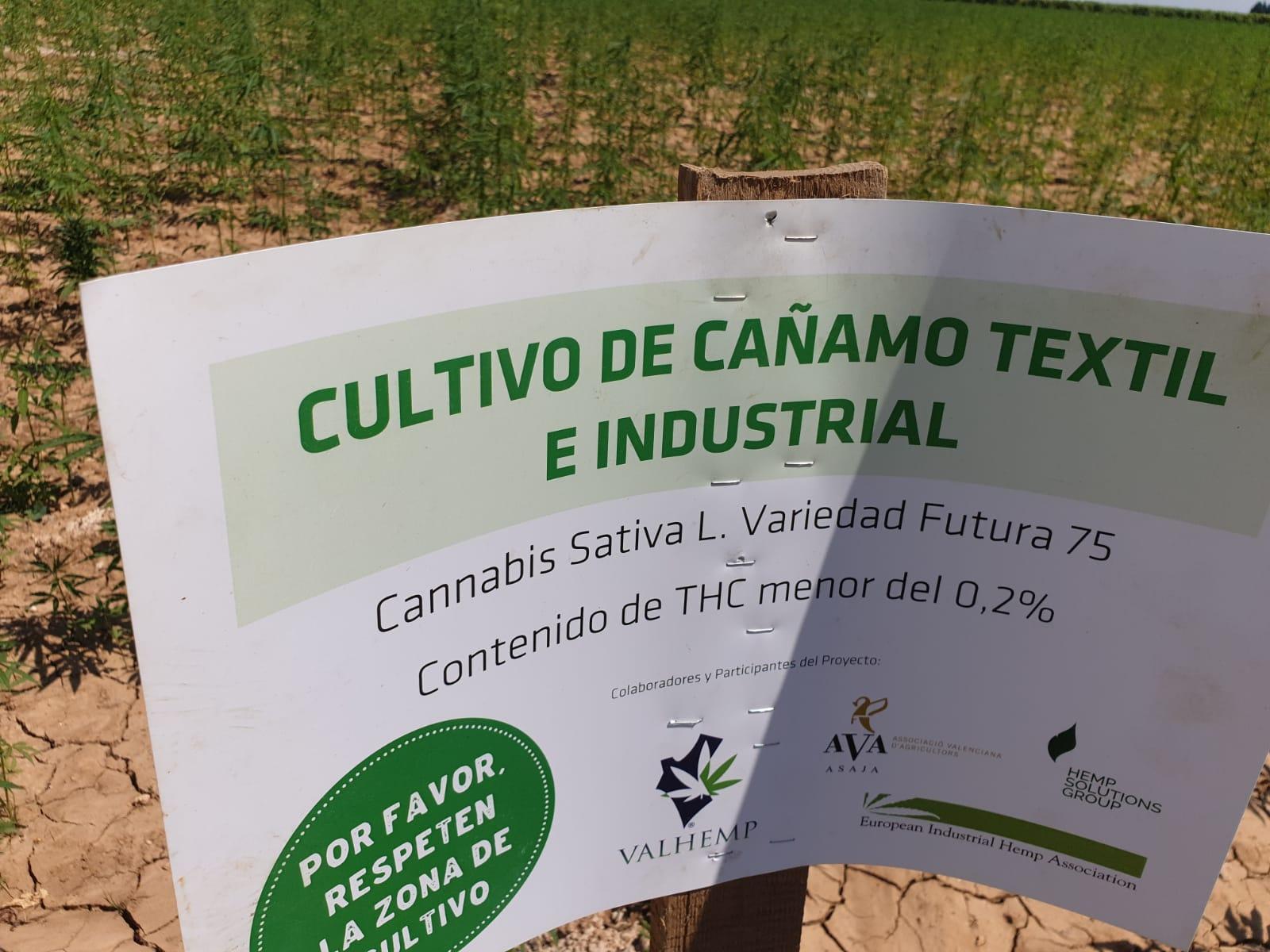 El-Cultivo-de-Cañamo-Industrial-Cannabis-Sativa.png