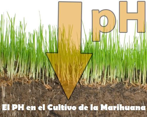 Importancia del Ph en el Cultivo de Marihuana