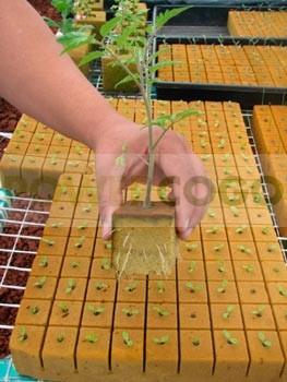PeatFoam MicroPlug siembra (Ø2,2 cm-alto 3,7 cm)