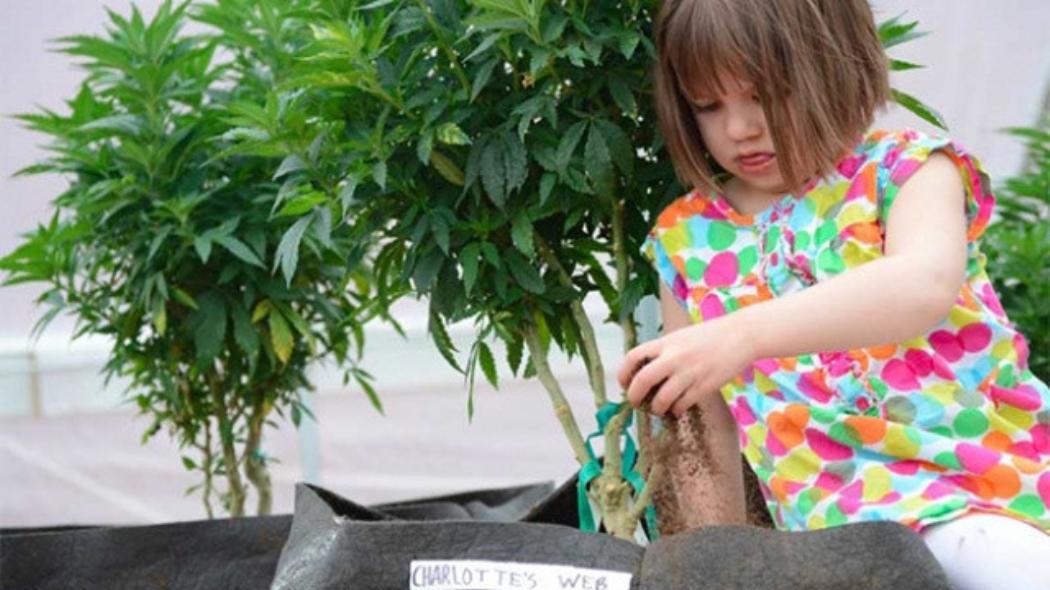 Qué-beneficios puede tener el CBD del cannabis sobre mi hijo