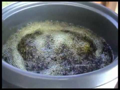 Receta Aceite de Cannabis con CBD