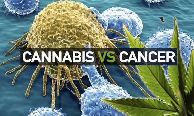 Marihuana Beneficios Cáncer Cerebral