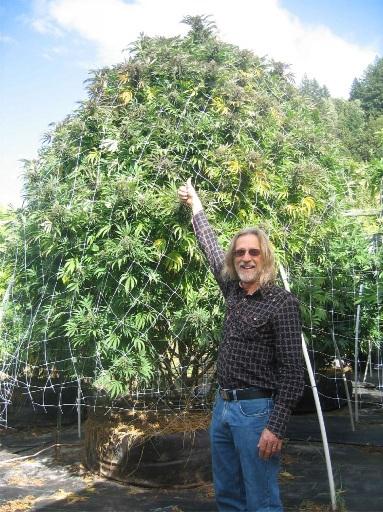 El Cultivo de Marihuana en exterior en suelo