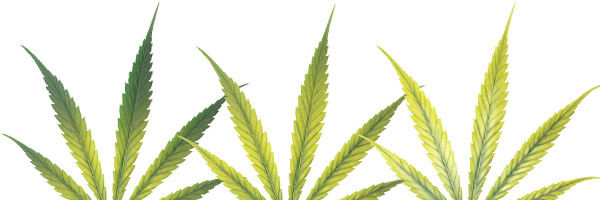 deficiencias-hojas-cannabis-hierro