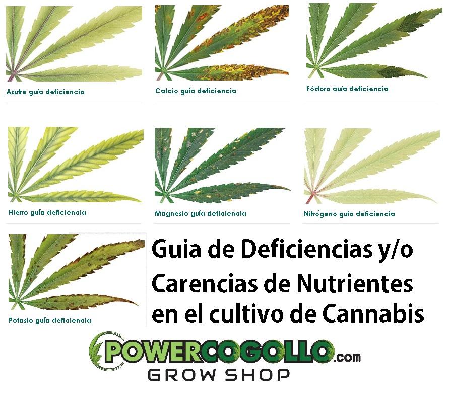 deficiencias-hojas-cannabis