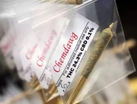 Porro Terapeuticos Cannabis
