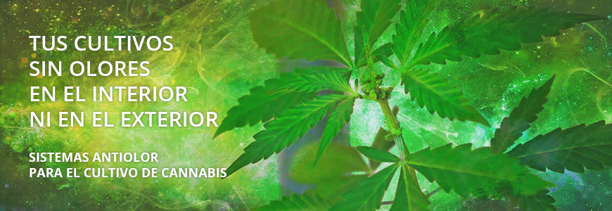 Sistemas antiolor para el cultivo interior marihuana